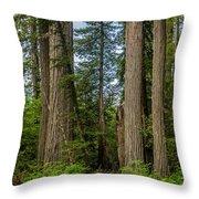 Group Of Redwoods Throw Pillow