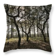 Grove Of Trees In The Ocala National Throw Pillow