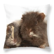 Guinea Pig And Baby Throw Pillow