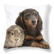 Guinea Pig And Blue-and-tan Dachshund Throw Pillow