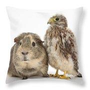 Guinea Pig And Kestrel Chick Throw Pillow
