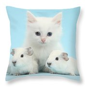 Guinea Pigs And Maine Coon-cross Kitten Throw Pillow