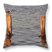 Gull At Sunset Throw Pillow