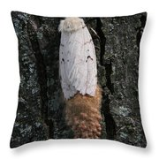 Gypsy Moth With Egg Mass Throw Pillow