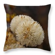 Hairy Aster Throw Pillow