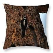 Hairy Woodpecker On Pine Tree Throw Pillow