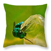 Halicid Wasp 1 Throw Pillow