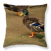 Handsome Mallard Throw Pillow