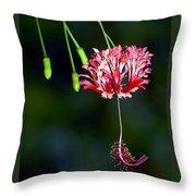 Hanging Coral Hibiscus Throw Pillow