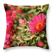 Happy Aster Throw Pillow