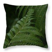 Hapuu Pulu Hawaiian Tree Fern - Cibotium Splendens Throw Pillow
