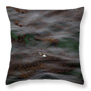 Harbor Seal In Kelp Bed Throw Pillow