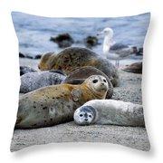 Harbor Seal Phoca Vitulina Mother Throw Pillow