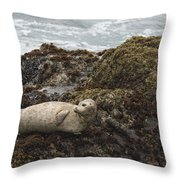 Harbor Seal  Point Lobos State Reserve Throw Pillow by Sebastian Kennerknecht