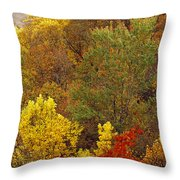 Hardwood Forest With Maple And Oak Throw Pillow