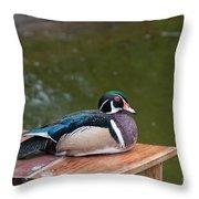 Harlequin Duck Throw Pillow