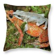 Harlequin Frog Atelopus Varius Pair Throw Pillow