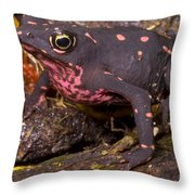 Harlequin Frog Throw Pillow