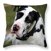 Harlequin Great Dane Throw Pillow