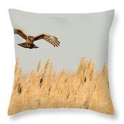 Harrier O'er Amber Waves Throw Pillow