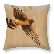 Harrier Over Golden Grass Throw Pillow