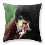 Harris Hawk Feeding Throw Pillow