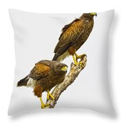Harris' Hawk Pair Throw Pillow