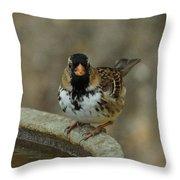 Harris's Sparrow Throw Pillow