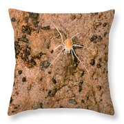 Harvestman Crosbyella Sp. In Cave Throw Pillow