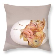 Hatching Chicken 12 Of 22 Throw Pillow