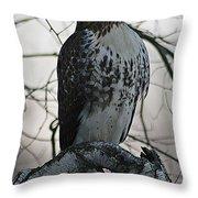 Hawk 7 Throw Pillow