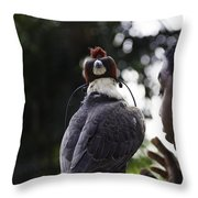 Hawk With Eyes Covered At A Show Inside The Jurong Bird Park In  Throw Pillow