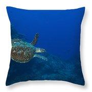 Hawksbill Sea Turtle, Kimbe Bay, Papua Throw Pillow