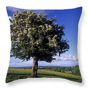 Hawthorn Tree On A Landscape, Ireland Throw Pillow