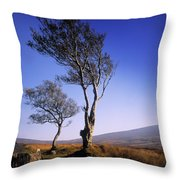 Hawthorn Trees In Sally Gap, County Throw Pillow