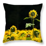Head And Shoulders Above The Rest Throw Pillow