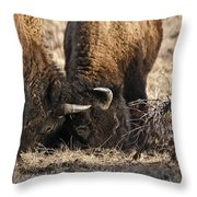 Head Butting Bison Throw Pillow
