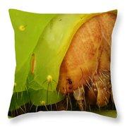 Head Of Polyphemus Caterpillar Throw Pillow