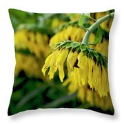 Head Of Sunflowers Throw Pillow