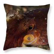 Head Shot Of A Brownish Red Coconut Throw Pillow