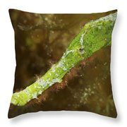 Headshot Of A Green Helimeda Ghost Throw Pillow
