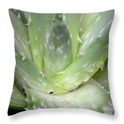 Heart Of An Aloe Throw Pillow
