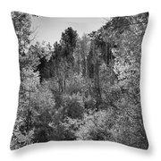 Heart Of The Aspen Forest Throw Pillow