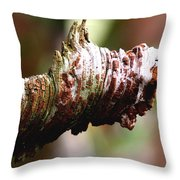 Heart Pine Limb Throw Pillow