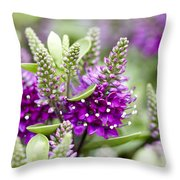 Hebe Hebe Sp Dona Diana Variety Flowers Throw Pillow