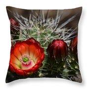 Hedgehog Cactus Flowers  Throw Pillow