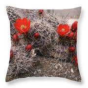 Hedgehog Cactus With Red Blossoms Throw Pillow