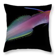 Helfreiky Firefish Throw Pillow