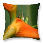 Heliconia Latispatha Throw Pillow