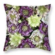 Hellebore Helleborus Sp Flowers Throw Pillow